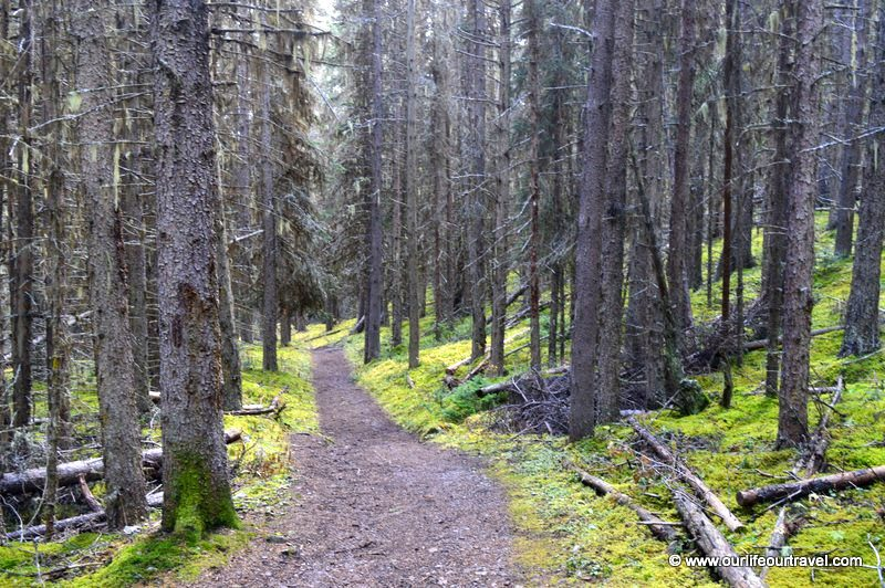 Walk in the forest, Edith Pass.